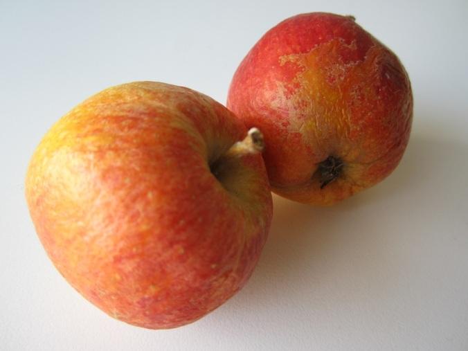 Apfelmuffins Mainbacken (4)